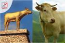 العلاقة بين السامري و عجل بني إسرائيل