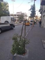 تكسير الأشجار على دوار ابن رشد من قبل مجهولين