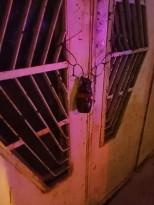 مجهولون يضعون قنبلة يدوية على باب منزل  في حارة الشيخ وسط مدينة الخليل فجر اليوم